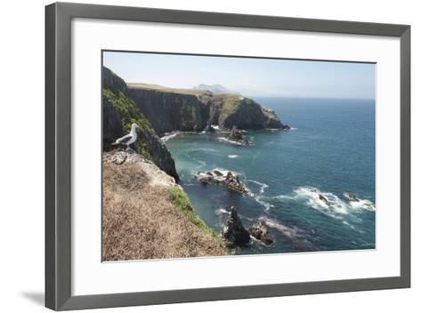 Gull Looking over the Ocean, Anacapa, Channel Islands National Park, California, USA-Antonio Busiello-Framed Art Print