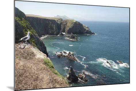 Gull Looking over the Ocean, Anacapa, Channel Islands National Park, California, USA-Antonio Busiello-Mounted Photographic Print