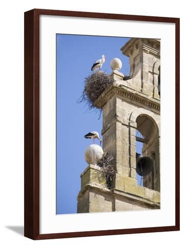 Two European White Storks and their Nests on Convent Bell Tower, Santo Domingo, La Rioja, Spain-Nick Servian-Framed Art Print
