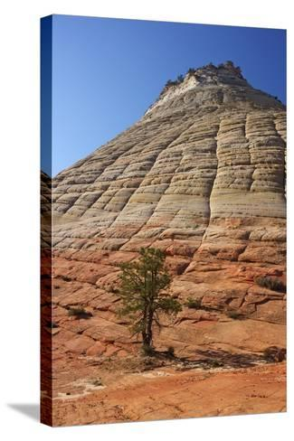 Checkerboard Mesa, Formed of Navajo Sandstone, Zion National Park, Utah, United States of America-Peter Barritt-Stretched Canvas Print