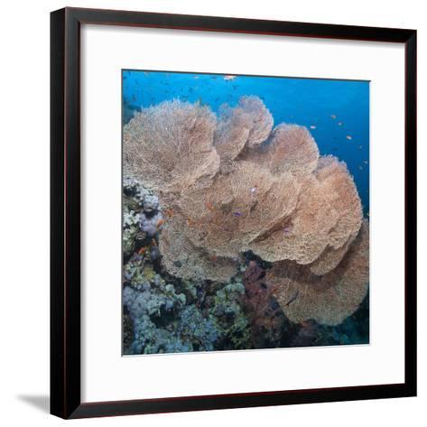 Close-Up of Giant Sea Fan Coral, Ras Mohammed Nat'l Pk, Off Sharm El Sheikh, Egypt-Mark Doherty-Framed Art Print