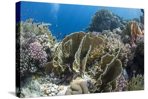 Tropical Coral Reef Scene in Natural Lighting, Ras Mohammed Nat'l Pk, Off Sharm El Sheikh, Egypt-Mark Doherty-Stretched Canvas Print