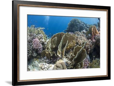 Tropical Coral Reef Scene in Natural Lighting, Ras Mohammed Nat'l Pk, Off Sharm El Sheikh, Egypt-Mark Doherty-Framed Art Print