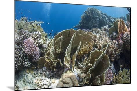 Tropical Coral Reef Scene in Natural Lighting, Ras Mohammed Nat'l Pk, Off Sharm El Sheikh, Egypt-Mark Doherty-Mounted Photographic Print