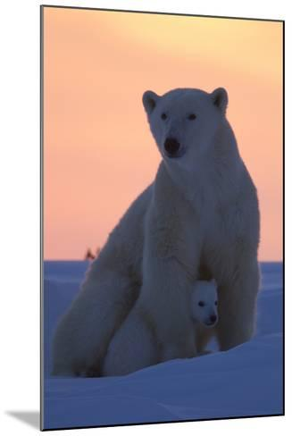 Polar Bear (Ursus Maritimus) and Cub, Wapusk National Park, Churchill, Hudson Bay, Manitoba, Canada-David Jenkins-Mounted Photographic Print