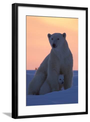 Polar Bear (Ursus Maritimus) and Cub, Wapusk National Park, Churchill, Hudson Bay, Manitoba, Canada-David Jenkins-Framed Art Print