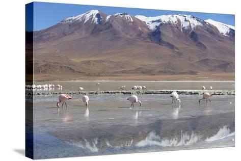 Flamingoes at Laguna Adeyonda on Altiplano, Potosi Department, Bolivia, South America-Ian Trower-Stretched Canvas Print