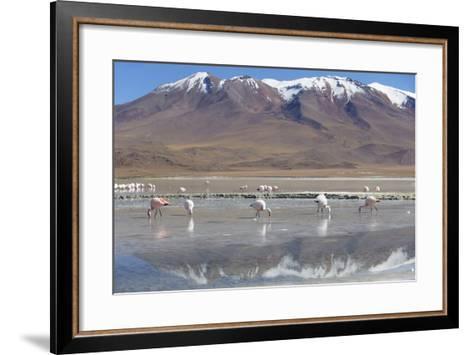 Flamingoes at Laguna Adeyonda on Altiplano, Potosi Department, Bolivia, South America-Ian Trower-Framed Art Print