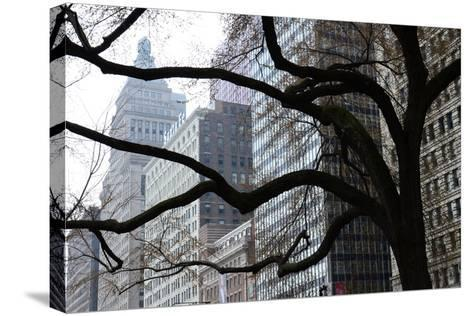 Buildings on Michigan Avenue Through a Leafless Tree in Early Spring-Paul Damien-Stretched Canvas Print