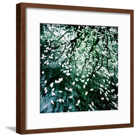 Cherry and Pear Tree Petals and Reflections on the Hood of a Car-Skip Brown-Framed Art Print