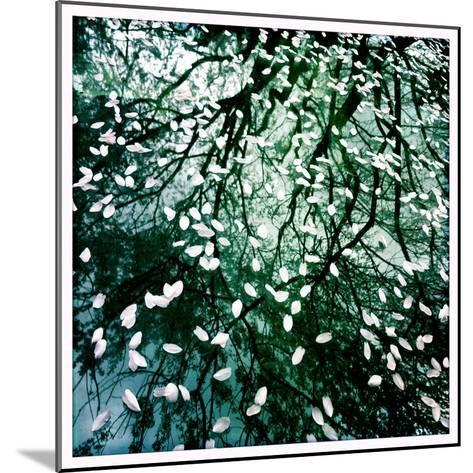 Cherry and Pear Tree Petals and Reflections on the Hood of a Car-Skip Brown-Mounted Photographic Print