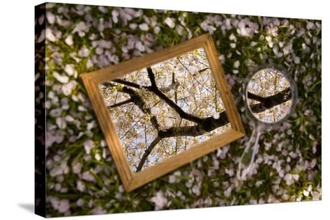 Mirrors on a Bed of Cherry Blossom Petals Reflect the Pink Treetops-Stephen St^ John-Stretched Canvas Print