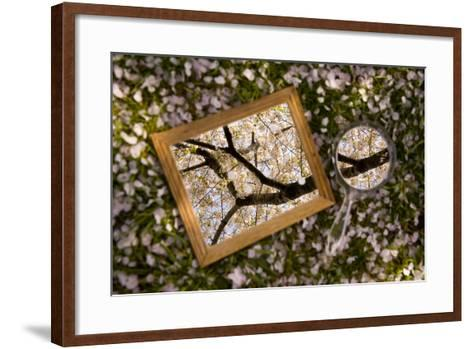 Mirrors on a Bed of Cherry Blossom Petals Reflect the Pink Treetops-Stephen St^ John-Framed Art Print