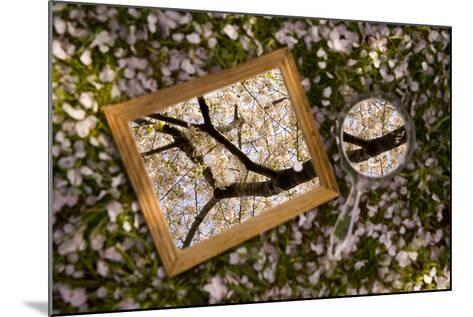 Mirrors on a Bed of Cherry Blossom Petals Reflect the Pink Treetops-Stephen St^ John-Mounted Photographic Print