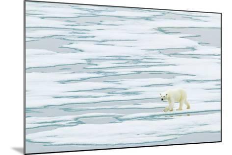 A Polar Bear Walks on Pack Ice-Ralph Lee Hopkins-Mounted Photographic Print