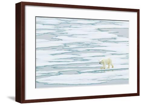 A Polar Bear Walks on Pack Ice-Ralph Lee Hopkins-Framed Art Print