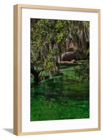 A Mother and Calf Manatee Enter a Protected Area-Ben Horton-Framed Art Print