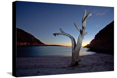 Oddly Placed Driftwood and an Anchored Sailboat in a Secluded Cove-Ben Horton-Stretched Canvas Print