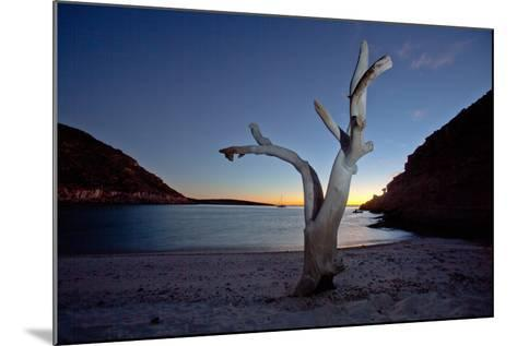 Oddly Placed Driftwood and an Anchored Sailboat in a Secluded Cove-Ben Horton-Mounted Photographic Print