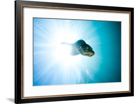 A Sea Lion Descends in a Beam of Light-Ben Horton-Framed Art Print