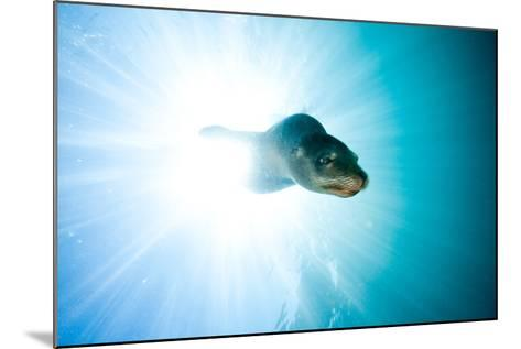 A Sea Lion Descends in a Beam of Light-Ben Horton-Mounted Photographic Print