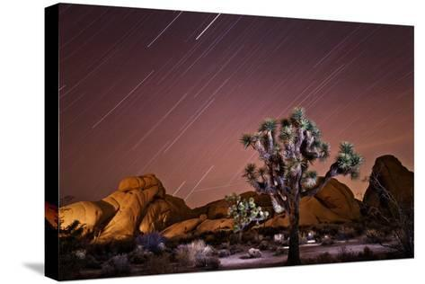 Star Trails over Joshua Trees and Granite Formations in the Desert-Ben Horton-Stretched Canvas Print