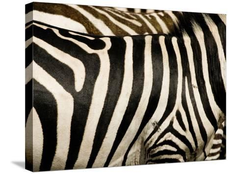 A Pattern of Stripes on a Burchell's Zebra.  Kenya.-Karine Aigner-Stretched Canvas Print