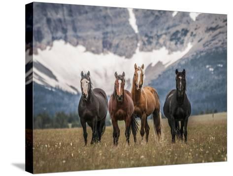 Horses Along the Rocky Mountain Front, Montana.-Steven Gnam-Stretched Canvas Print
