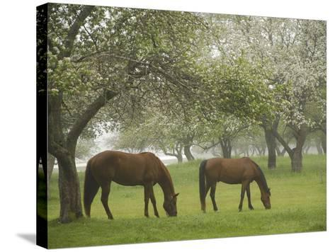 Two Horses Eating in Spring Pasture, Cape Elizabeth, Maine-Nance Trueworthy-Stretched Canvas Print