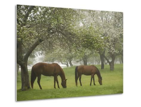 Two Horses Eating in Spring Pasture, Cape Elizabeth, Maine-Nance Trueworthy-Metal Print
