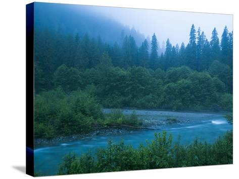 Evening in the Forest, Washington-Ethan Welty-Stretched Canvas Print