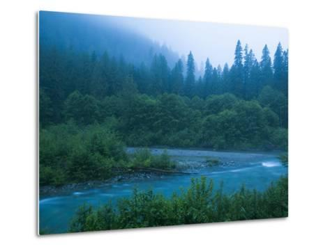 Evening in the Forest, Washington-Ethan Welty-Metal Print