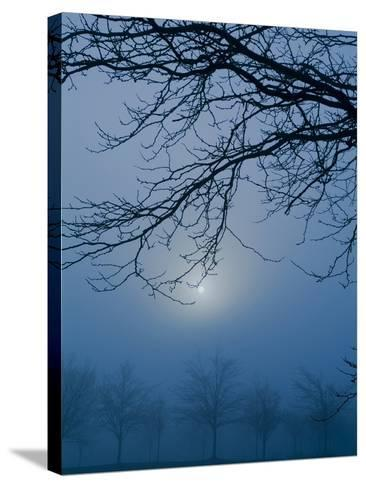 Fog and Tree Silhouette in Morning-James Shive-Stretched Canvas Print