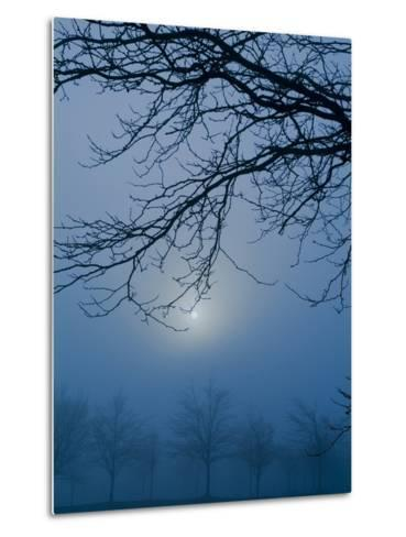 Fog and Tree Silhouette in Morning-James Shive-Metal Print