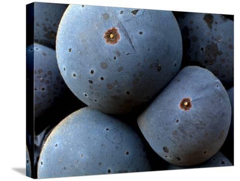 Healdsberg, Sonoma County, California, Vineyards-Ian Shive-Stretched Canvas Print