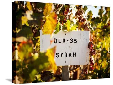 Sonoma Vineyard No.1-Ian Shive-Stretched Canvas Print