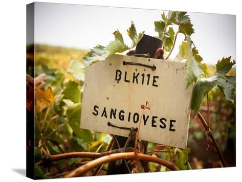 Vineyards-Ian Shive-Stretched Canvas Print