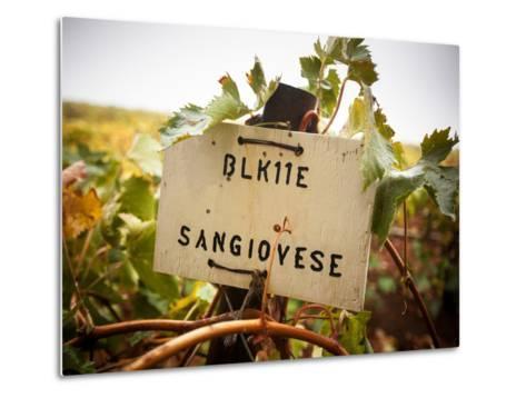 Vineyards-Ian Shive-Metal Print