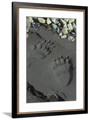 Grizzly Bear Tracks, Denali National Park, Alaska, USA-Gerry Reynolds-Framed Art Print