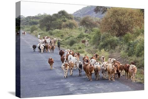 Herd of Farm Cattle on Country Road in Rift Valley, Ethiopia-Martin Zwick-Stretched Canvas Print