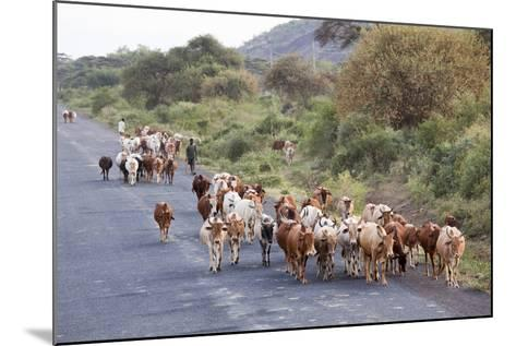 Herd of Farm Cattle on Country Road in Rift Valley, Ethiopia-Martin Zwick-Mounted Photographic Print