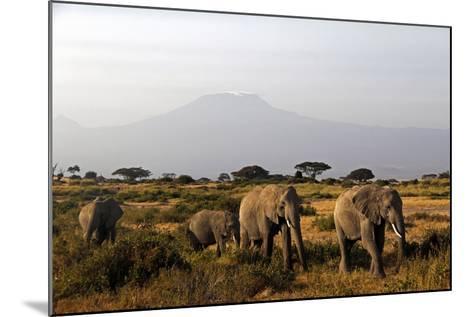 Elephants and Mt Kilimanjaro, Amboseli, Kenya, Africa-Kymri Wilt-Mounted Photographic Print