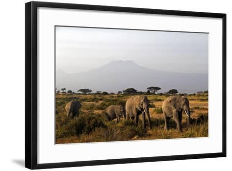 Elephants and Mt Kilimanjaro, Amboseli, Kenya, Africa-Kymri Wilt-Framed Art Print