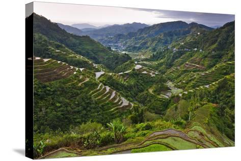 Rice Terraces, Agriculture, Philippine Cordilleras, Banaue, Ifugao, Philippines-Keren Su-Stretched Canvas Print