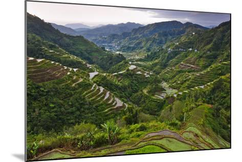Rice Terraces, Agriculture, Philippine Cordilleras, Banaue, Ifugao, Philippines-Keren Su-Mounted Photographic Print