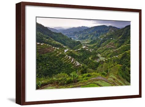 Rice Terraces, Agriculture, Philippine Cordilleras, Banaue, Ifugao, Philippines-Keren Su-Framed Art Print