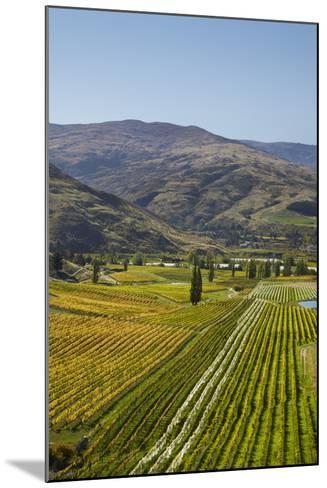 Felton Road Vineyard, Autumn, Bannockburn, Central Otago, South Island, New Zealand-David Wall-Mounted Photographic Print
