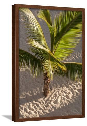 Palm Tree, Bavaro Beach, Higuey, Punta Cana, Dominican Republic-Lisa S^ Engelbrecht-Framed Art Print