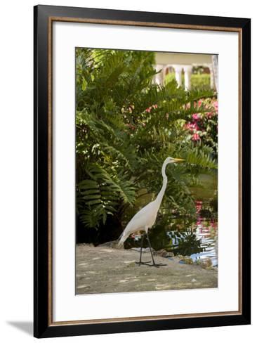 White Egret Tropical Bird, Bavaro, Higuey, Punta Cana, Dominican Republic-Lisa S^ Engelbrecht-Framed Art Print