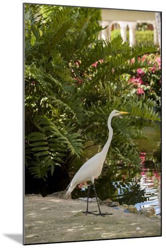 White Egret Tropical Bird, Bavaro, Higuey, Punta Cana, Dominican Republic-Lisa S^ Engelbrecht-Mounted Photographic Print